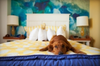 Spí s vámi pes v posteli? Klíště a jiní vetřelci spí taky!