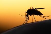 Komáři útočí! Zbavte se nepříjemného svědění po jejich štípnutí